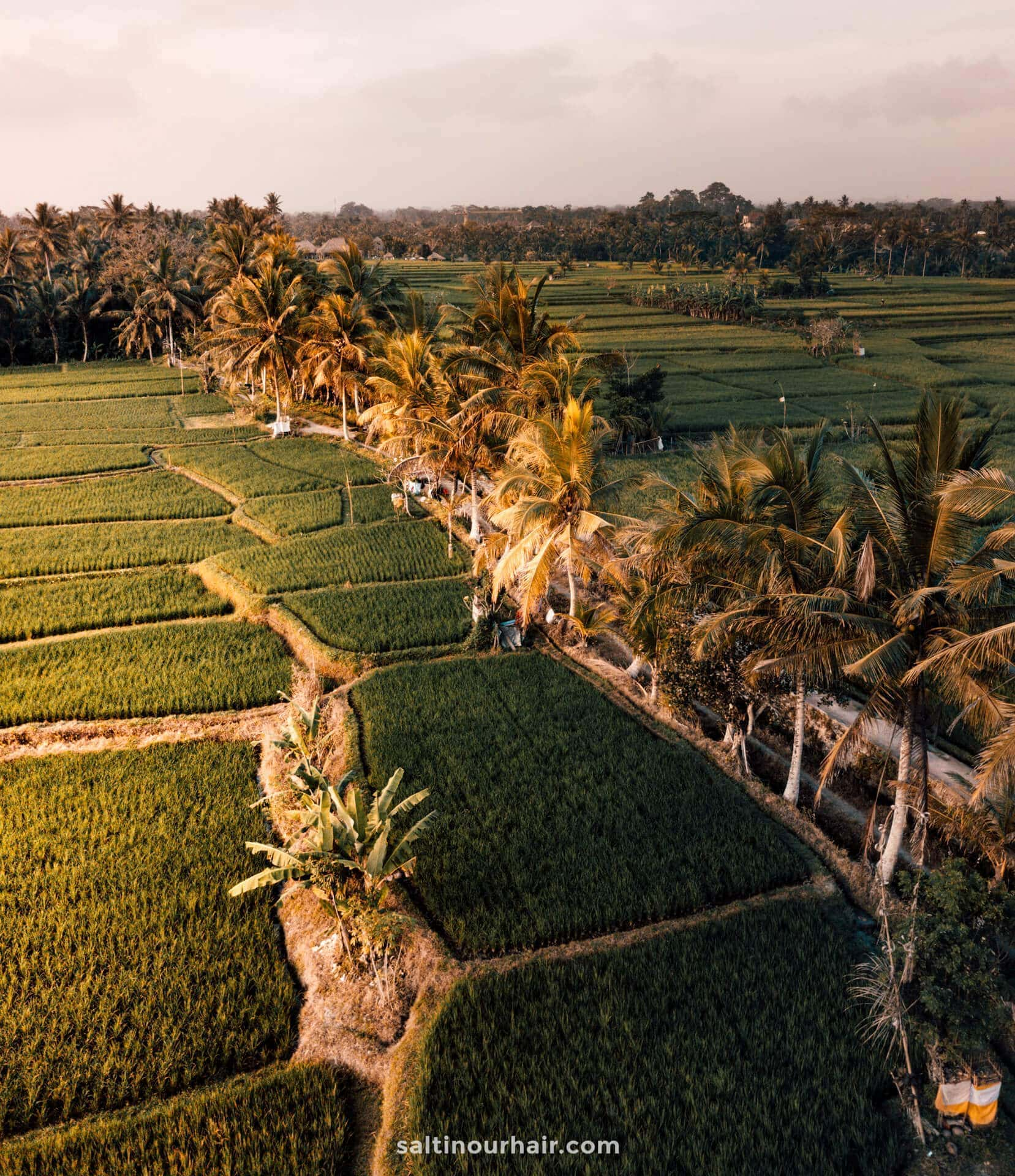 things to do ubud ricefields walk drone