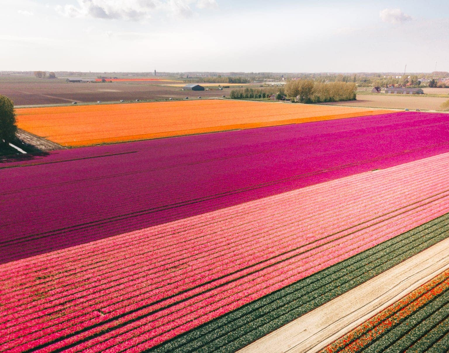 tulips netherlands rainbow field