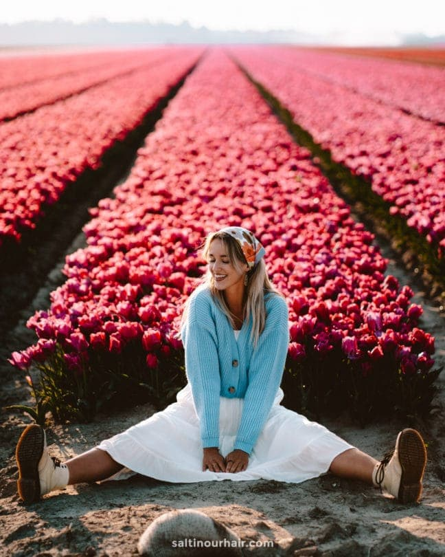 best free tulips fields