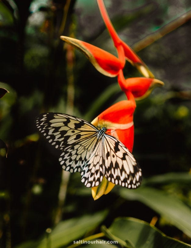 siquijor butterfly sanctuary