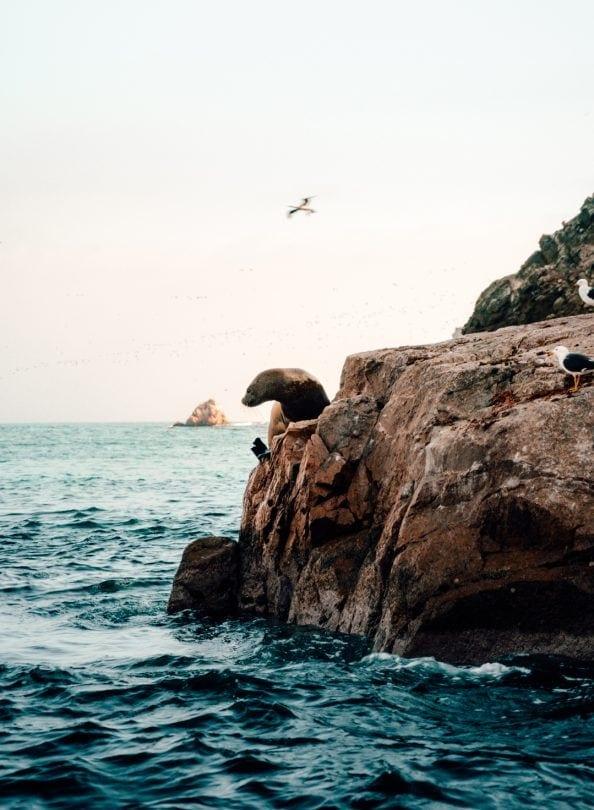 peru travel guide Ballestas Islands paracas
