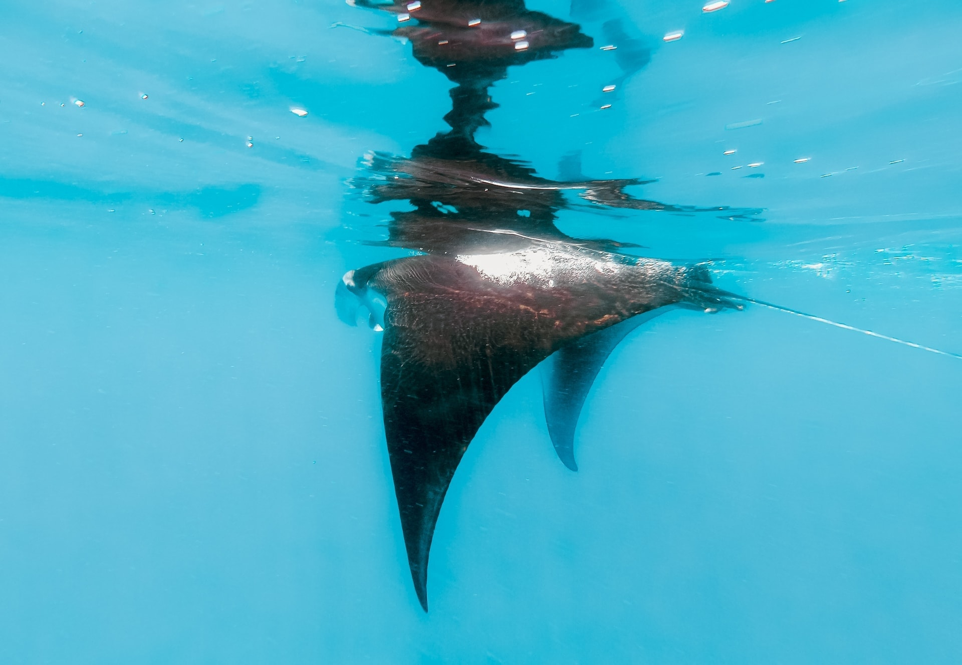 things to do nusa lembongan manta rays.