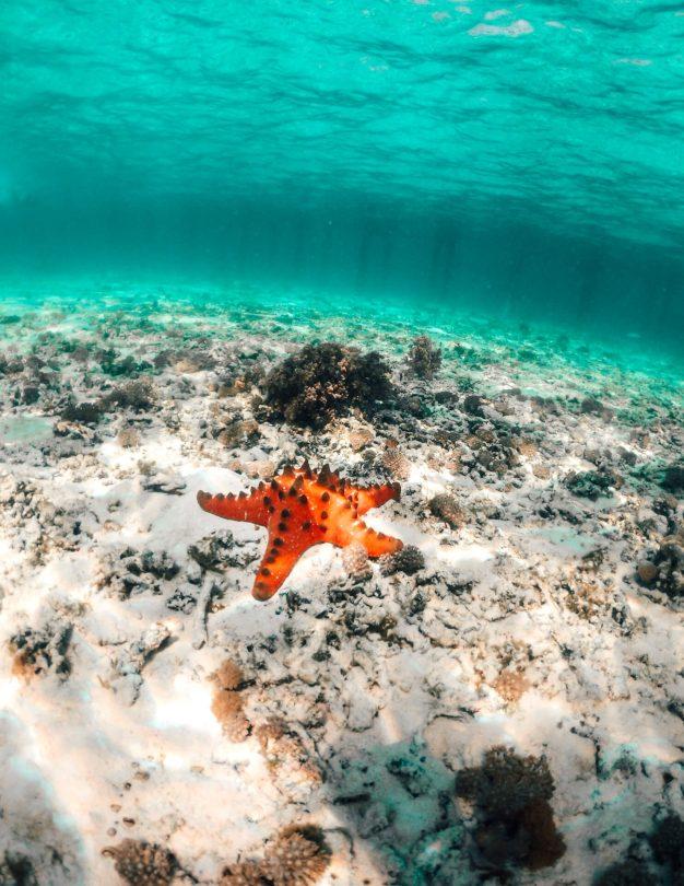clean ocean plastic