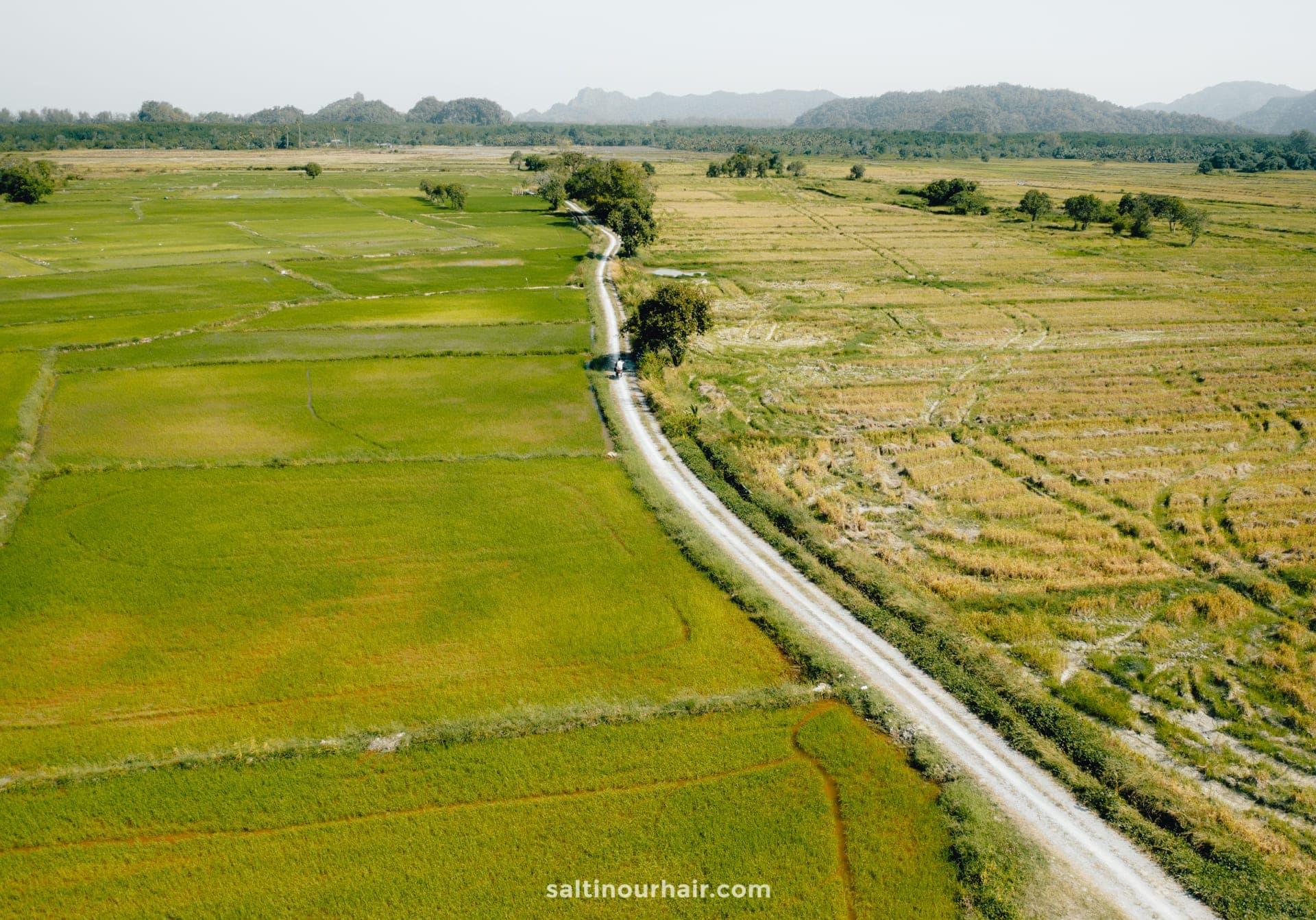 langkawi malaysia rice paddies
