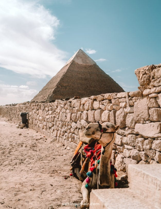 cairo pyramids giza camel