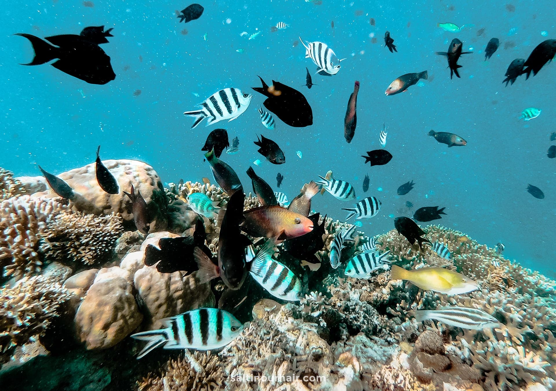 sustainable travel coral reef