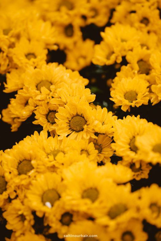 flowers hanoi vietnam