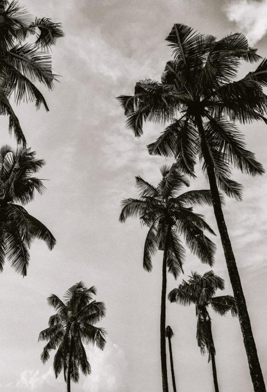 karela india palm trees